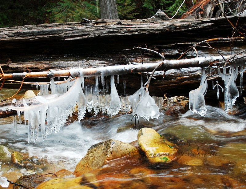 Natural Photography.  Icicles on a fallen log.