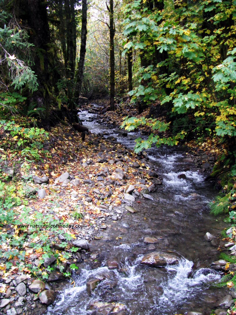 Photographic marvel of a creek roiling in the fall.