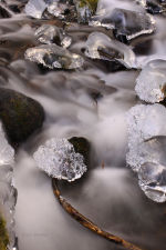 Wahkeena Creek. Waders, fishing waders, winter boots.  Nature picture.