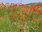 Wildflower seeds.  Grow your own wildflowers.  Flower Gardens.