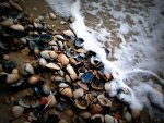 Seashells.  Nature picture.