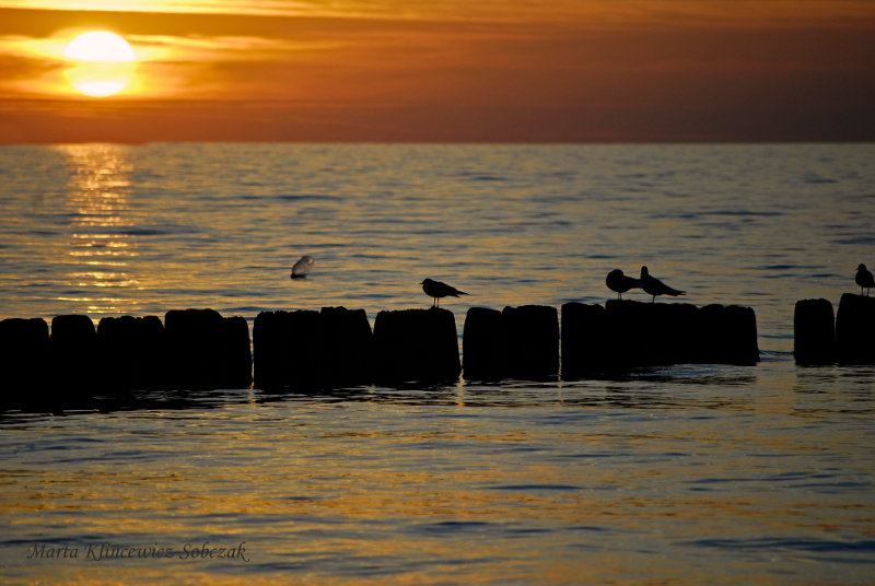 Tour Poland, polish sea, polish tourism.  Nature picture.