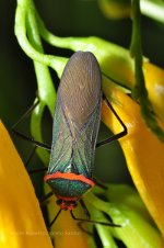 Colorful insect, Vinhedo, Brazil.  Tour brazil.  Go to Brazil.