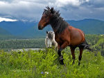 Horses, Mountain Altai.  Horse riding, bridles, stables.