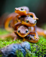 salamanders, camera flash, macro lens.