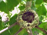 Hummingbird babies.  Hummingbird feeders, hummingbird food.
