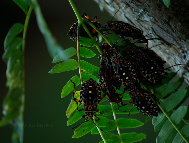 Bugs on a tree!