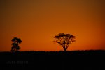 Silhouette of a tree against orange sky.