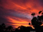 australian sunrise and gum trees