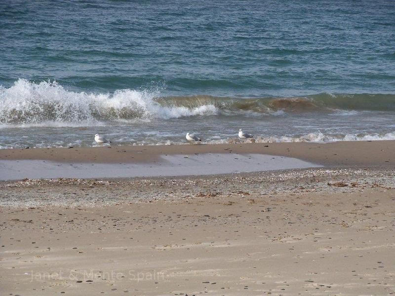 Seagulls on Lake Erie.