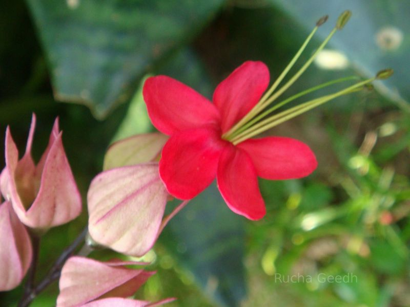 Flower in India.  Flowers, roses, tulips.