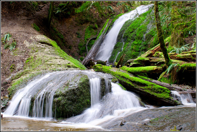 Coal Creek Falls in Cougar Mountain Regional Wildland Park.