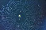 Spider Web in Brazil.