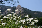 Boulder flatirons and wildflowers.