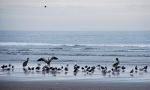 Birds on the beach