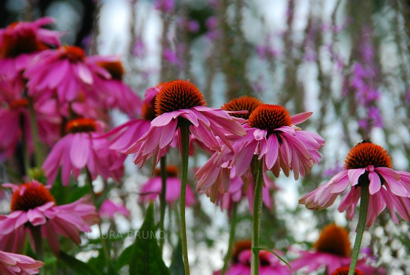 gorgeous pink flowers!