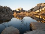 Pond in Joshua Tree National Park