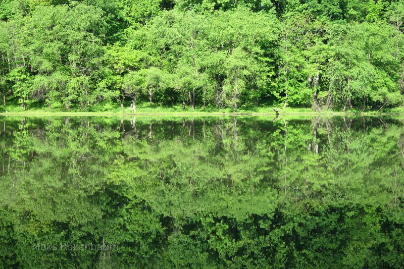 Reflections on a small lake in Maryland.