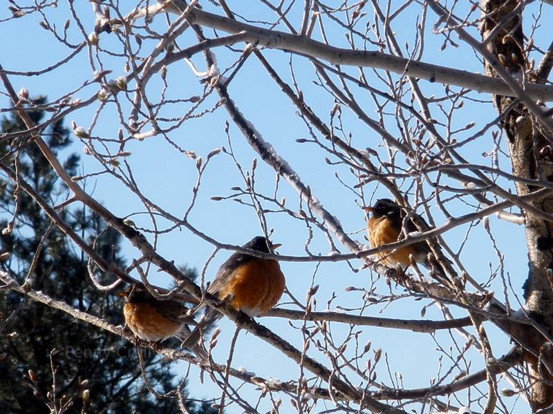 Birds in Pagosa Springs, CO