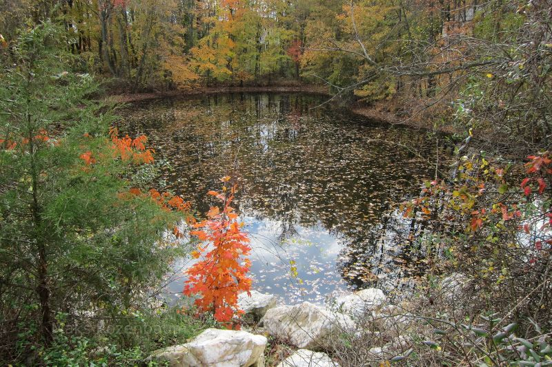 Fall leaves in a Maryland pond.