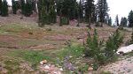 Wildflowers in Lassen