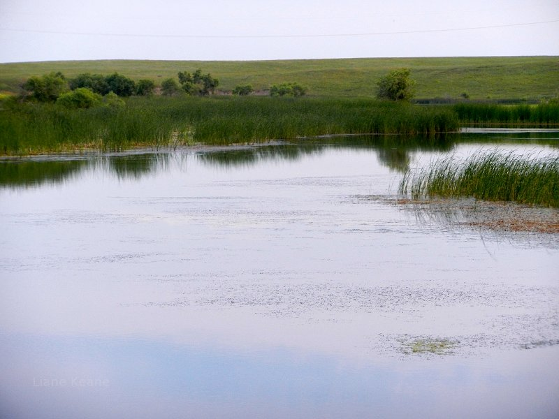 Pond and a Prairie