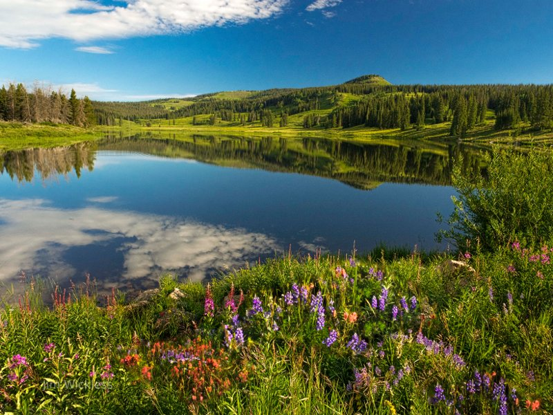 Gorgeous Mountain meadow, flowers and lake in Colorado