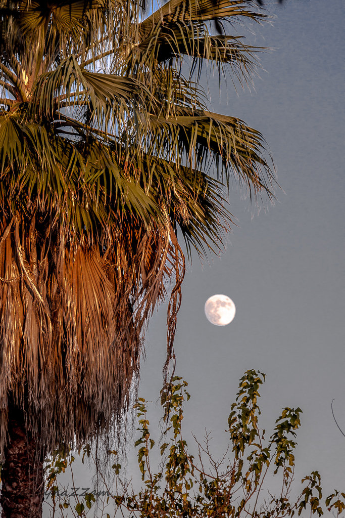 Palm trees and full moon.