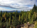 Fir and Larch in northern Idaho
