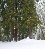 Snow in Washington State