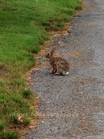 Bunny Rabbit in Nazaraeth, Pennsylvania