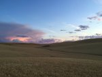 Wheat field at sunset in the Palouse country of Idaho and Washington