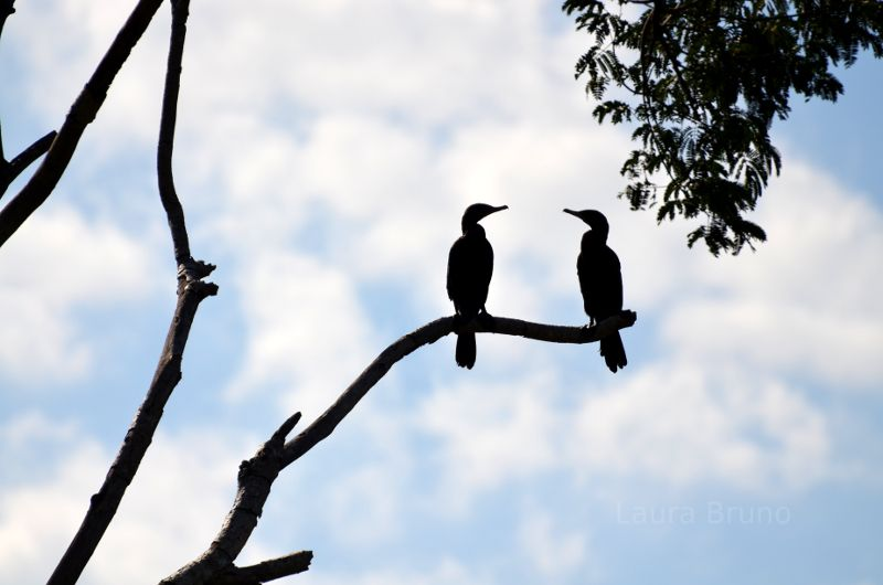 A pair of birds in Brazil.