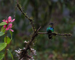 Beautiful hummingbird in Costa Rica