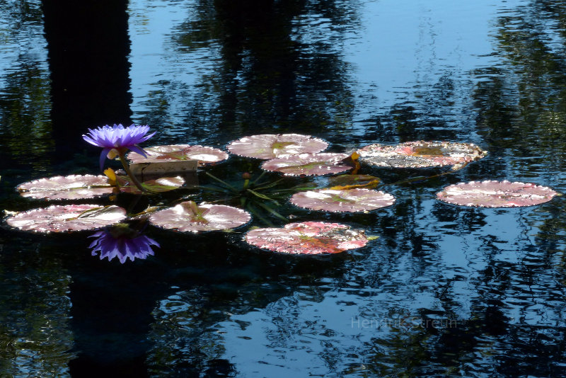 Taken at the Reflecting Pond at the Royal Botanical Gardens in Hamilton, Ontario, Canada