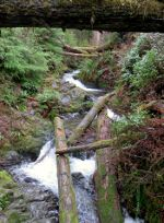 Creek in Rain forest in Washington state.