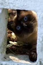 Cat peeping through a block in Brazil
