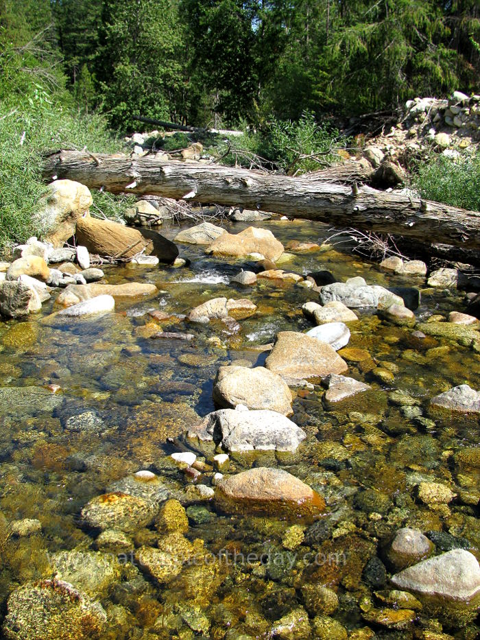 Stream in Northern California