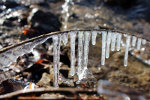 Water hangs frozen from a small twig