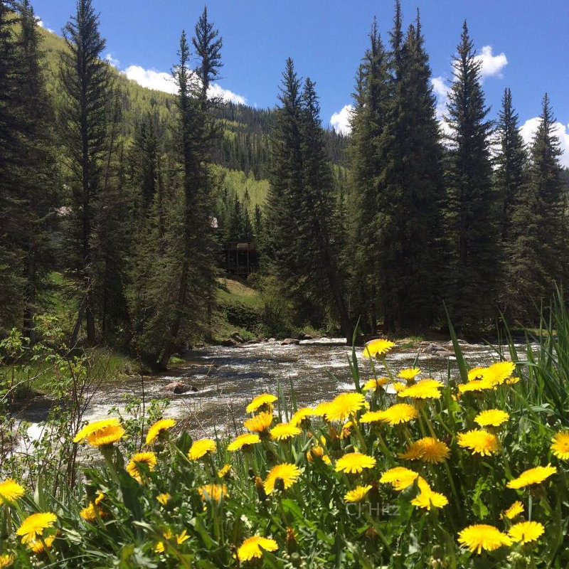 Dandelions in the mountains