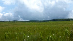 Beautiful meadow in Shenandoah National Park