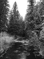 Black and White river and woods covered in frost.