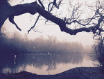 Misty Pond in West Sussex, England