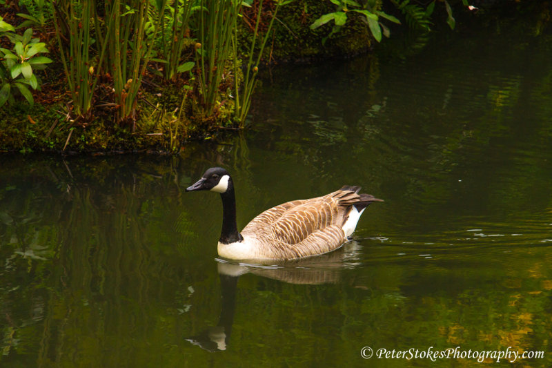 Canada Goose in the UK