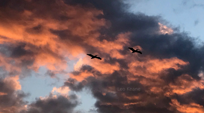 Beautiful sunset shot of pelicans in Minnesota