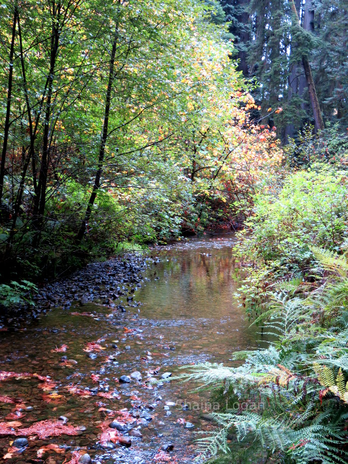 Creek in Oregon