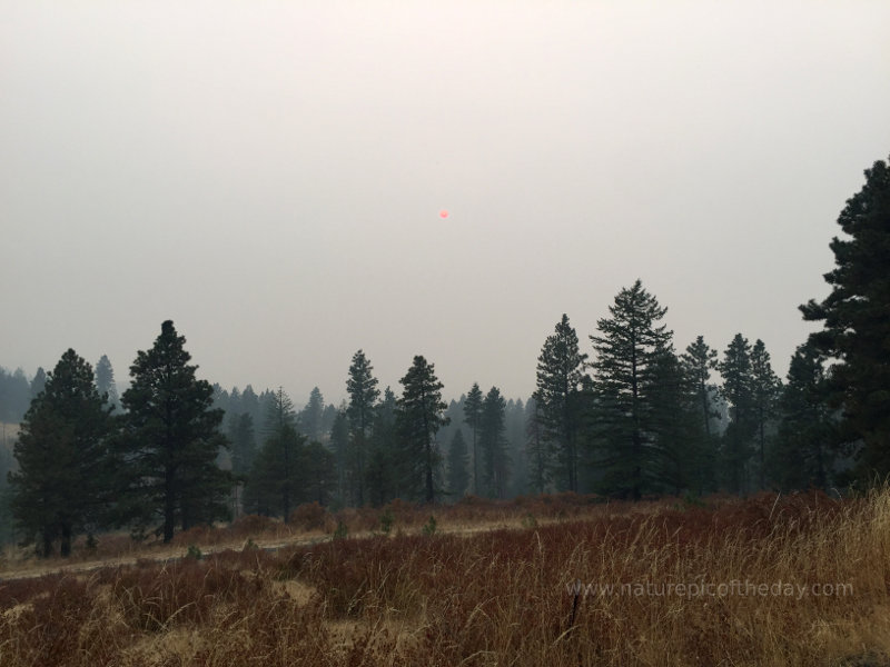 Sun through smoke over the Palouse
