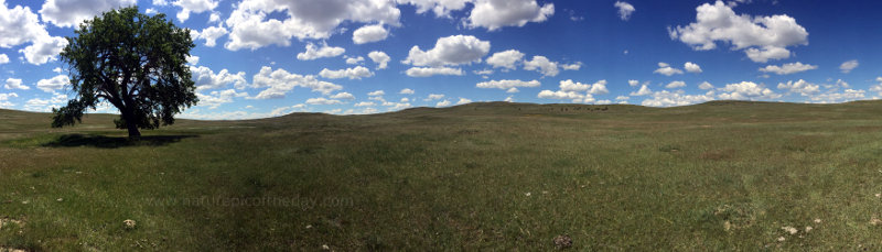 Eastern Montana Prairie and Ranch land