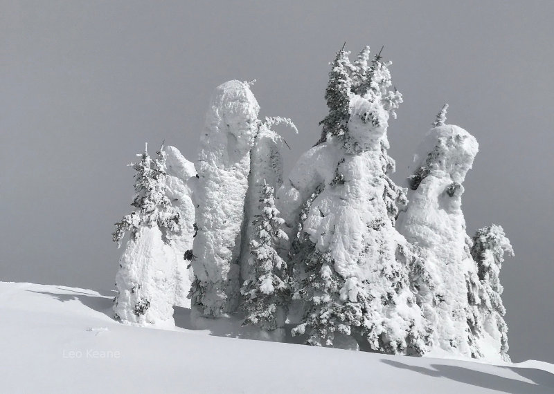 Snow Covered Trees on The Big Mountain