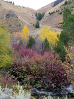 Beautiful fall colors in Idaho